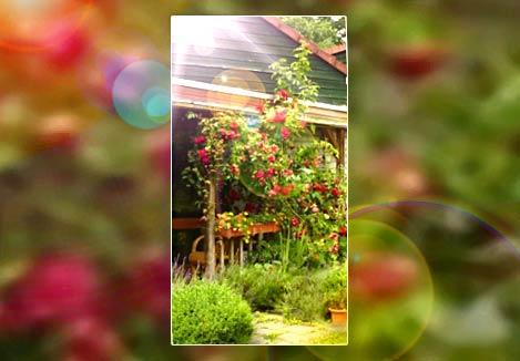 rosies-roses